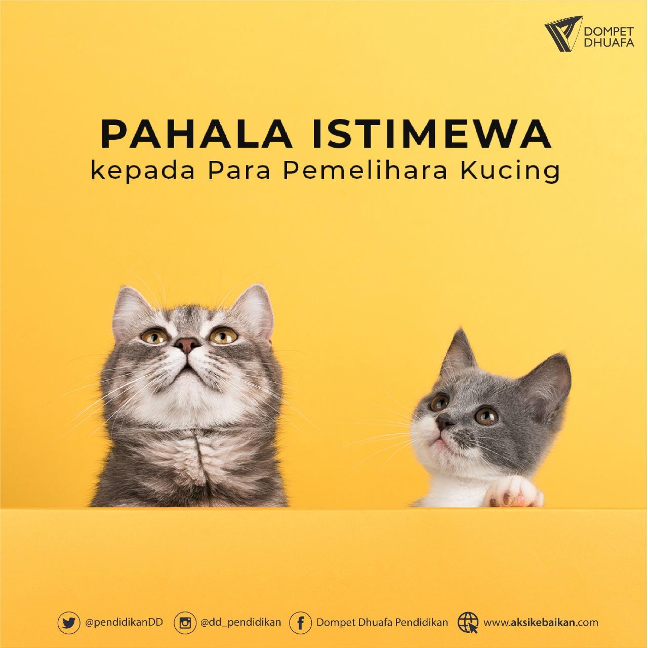 Pahala Istimewa Allah kepada Para Pemelihara Kucing